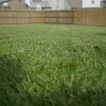 Lime lawn to help bring up pH levels...green-grass