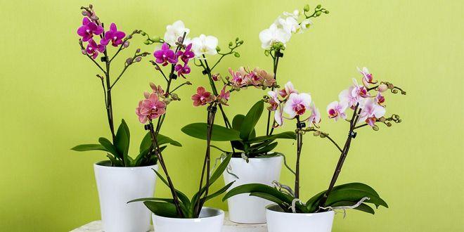 Yeni İş Tebriği İçin İşyerine Hangi Tebrik Çiçeği Gönderilir? >>
