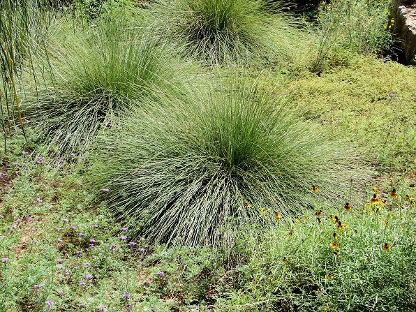 Pin by judy kales on garden ideas pinterest for Southwest landscaping plants