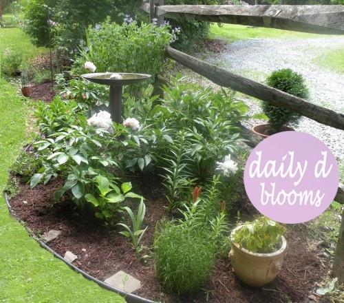 Herb Garden On Fence: 12 Best Split Rail Images On Pinterest