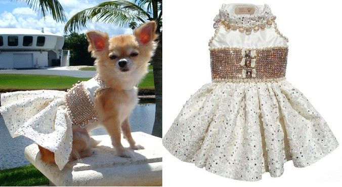 vestido cao 2 Roupa para cachorro moldes e fotos