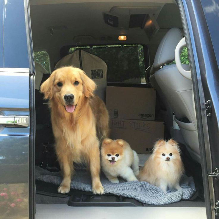 Blue, Boo & Buddy on the road again!