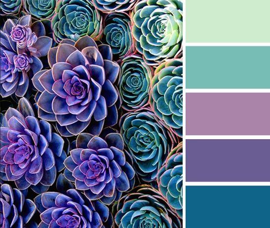 Succulents color palette (green, purple, turquoise).