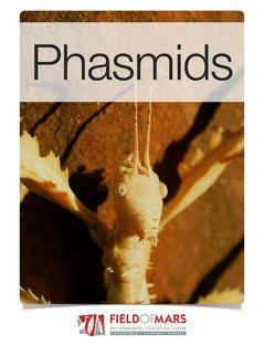 Phasmids by Elizabeth Shenstone & Steven Papp with iBooks. $1.99