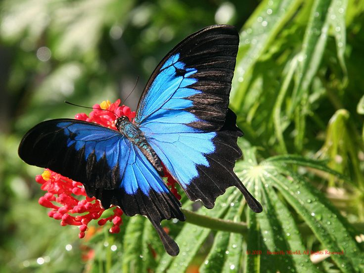 Dunk Island Animals: 121 Best Images About Look A Butterfly! On Pinterest