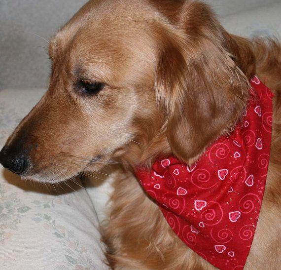 Bcb D Dd Fdfc Db Ba B Red Hearts Good Girl on Stay On Dog Diaper Pattern
