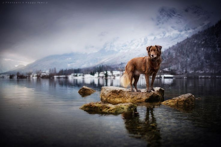 "awesome-picz: "" Photographer Captures Soulful Portraits Of Dogs In Austrian Wilderness. """