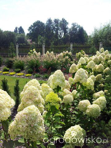 Moja codzienność - ogród Oli - strona 946 - Forum ogrodnicze - Ogrodowisko