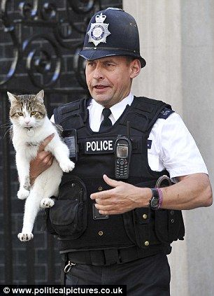 "Larry the cat gives security the runaround before being nabbed moments before Prime Minister David Cameron was due to arrive. Larry wanted to go inside, but a policeman picked him up and set him on Mr. Cameron's Mini Cooper. Larry, not appreciating the move, promptly took off at, ""a million miles an hour,"" and ran back to the door, where he sat calmly waiting for the policeman to catch up. The sheepish policeman then decided it was best to accede to Larry's wishes and let him in."