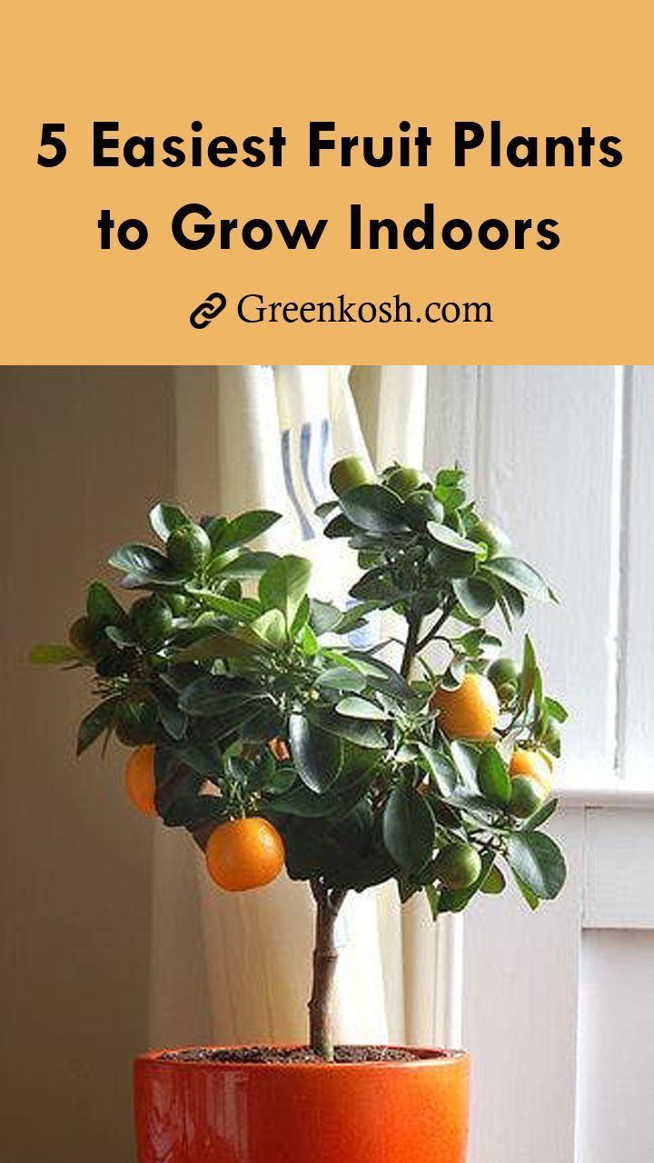 5 Easiest Fruit Plants To Grow Indoors Indoor Fruit Plants Growing Plants Indoors Indoor Fruit