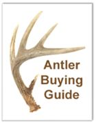 Dog Antler Chews – All-Natural & Safe Antlers For Dogs