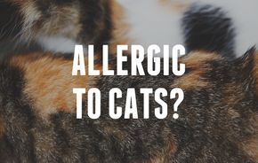 Allergic To Cats? Great tips for living with cat allergies - hopefully I never need these, but just in case (and to share!).