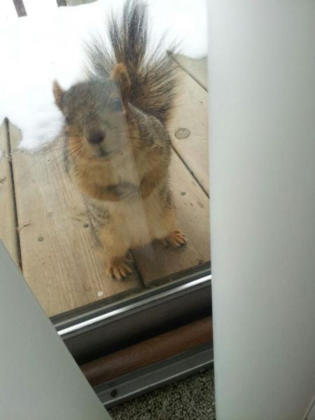 """""""Have you seen the man who gives me peanuts??  'Cause… I want peanuts."""""""