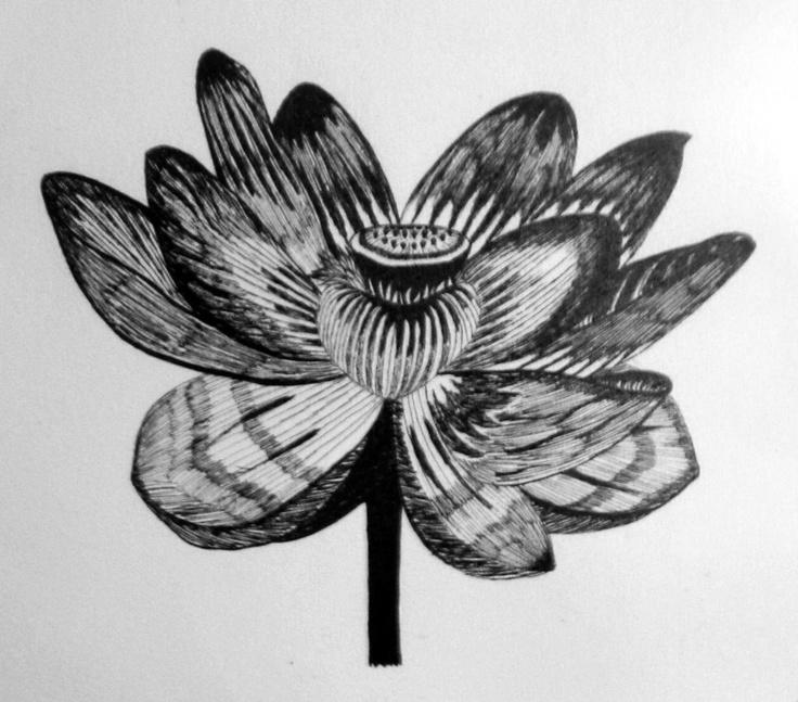 Dibujo de una Flor. Elaborado a Tinta china