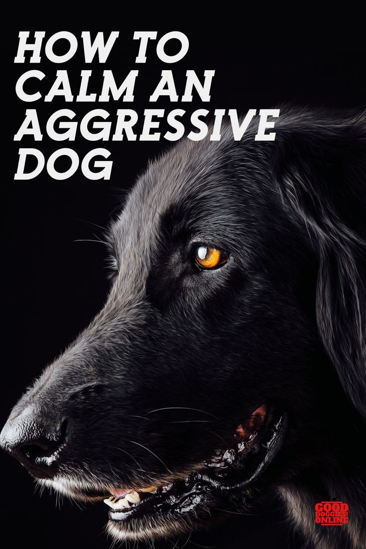 How To Calm Down An Aggressive Dog Aggressive Dog Dog Training