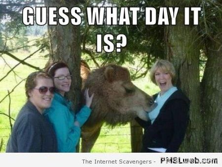 Jokey Hump day – When laughter is the name of the game | PMSLweb