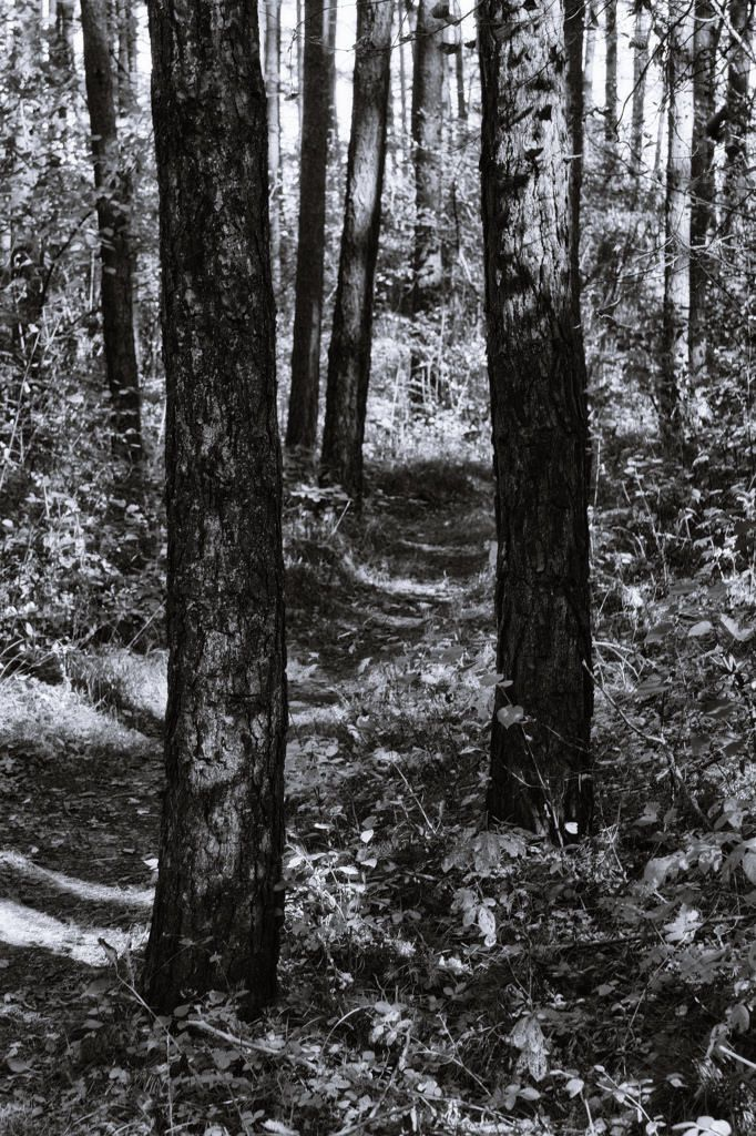 bwstock.photography  //  #forest