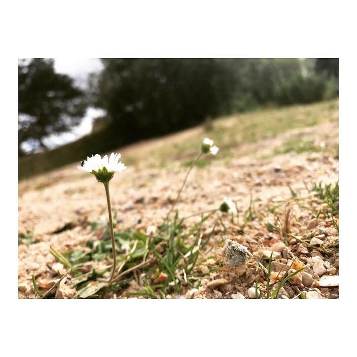 Did you notice it ? #smallthingsinlife #behappy #ilovenature #naturegram #instanature #flowers #artistic #art #dreamer #romantic #f4f #travel #traveller #travelblogger #justlikethat
