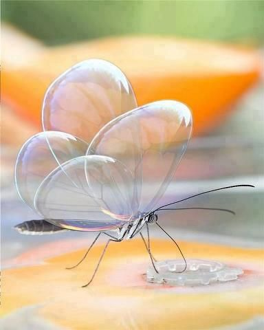 Translucent butterfly - clearly beautiful!~~tko