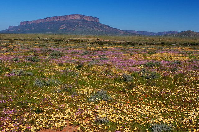 From the west coast of South Africa's turbulent Atlantic coastline up to the little town of Garies in the south and the Orange River in the north Namaqualand languidly stretches