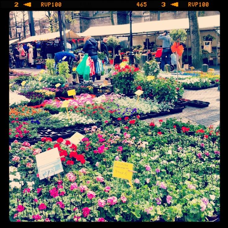 Never a better place for flowers- Utrecht holland
