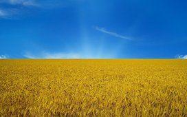 乌克兰、 国旗、 天空、 标志