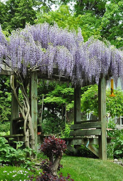 Best 25 Wisteria Trellis Ideas On Pinterest Wisteria