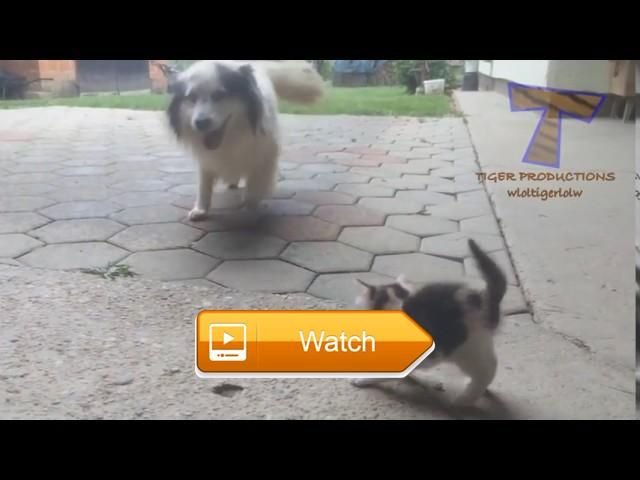 Scared cats and dogs Funny and cute animal compilation  Funny Dogs Funny Dog Pictures Funny Dog Memes Funny Dog Names Funny Dog Costumes Funny Dog Quotes Funny Dog Pics Funny Dog Faces Funny  on Pet Lovers