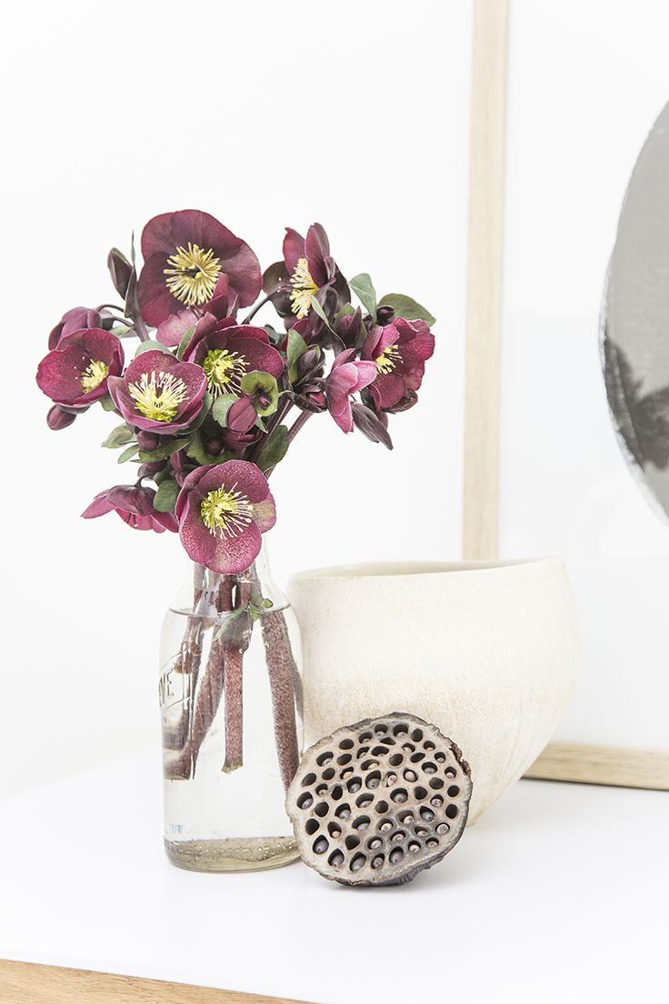 Hellebore 'Ruby Daydream' Cut Flowers