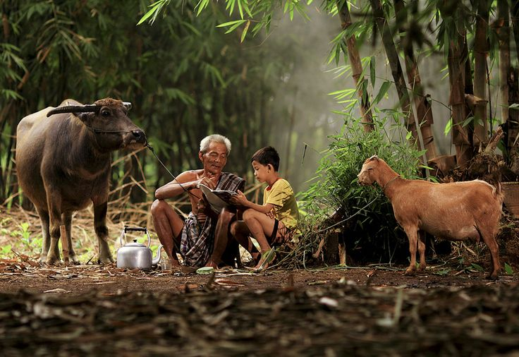 This picture, with the water buffalo and old man, perhaps helping the little boy with his homework, really reminds me of that traditional Thai lifestyle in the countryside. It just warms my heart.