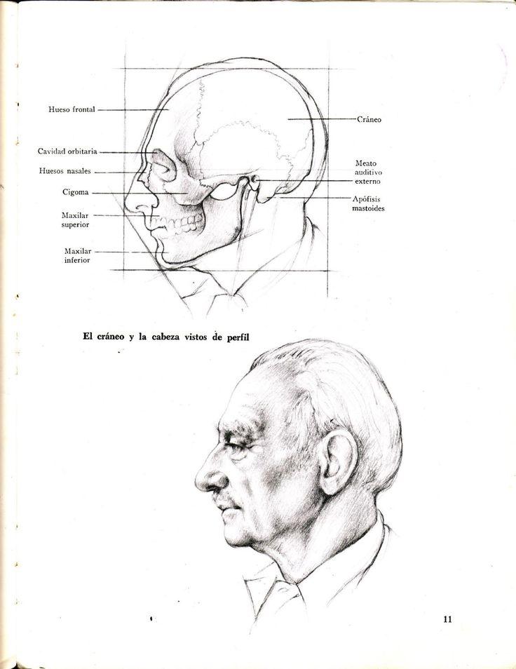 Dibujo Anatomico de la Figura Humana