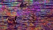 "New artwork for sale! - "" Animals Ducks Water Pond Nature  by PixBreak Art "" - http://ift.tt/2tQVvQj"