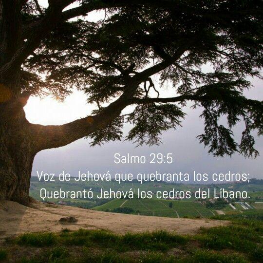 Salmo 29:5  Voz de Jehová que quebranta los cedros; Quebrantó Jehová los cedros del Líbano.
