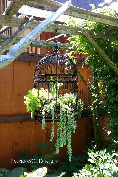 creative and unusual containers for the garden, container gardening, gardening, raised garden beds, repurposing upcycling, succulents, Old birdcages and succulents the perfect arrangement