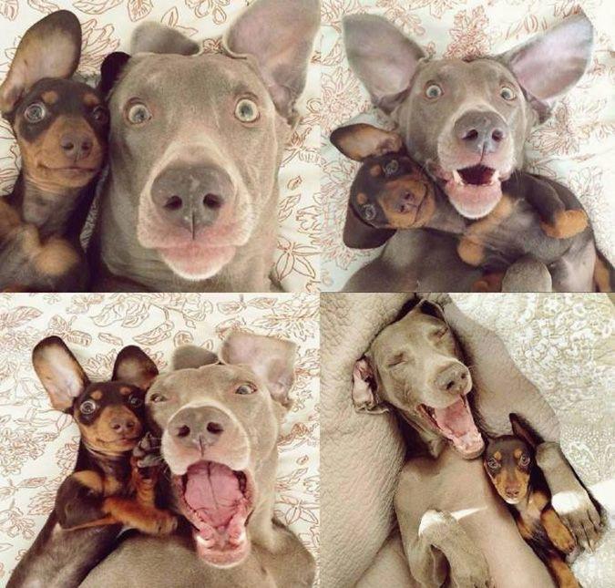 Hunde-Selfie