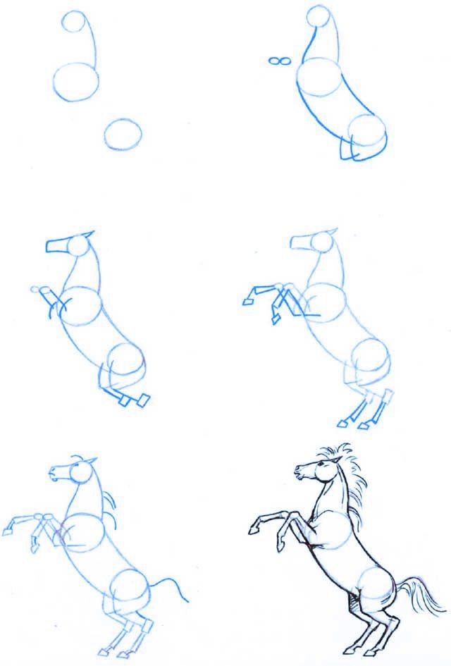 Dibujo_estructura-caballo-01