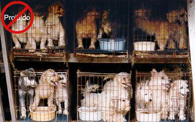 Proibida-a-venda-e-exposição-de-animais-em-vitrines-e-gaiolas1