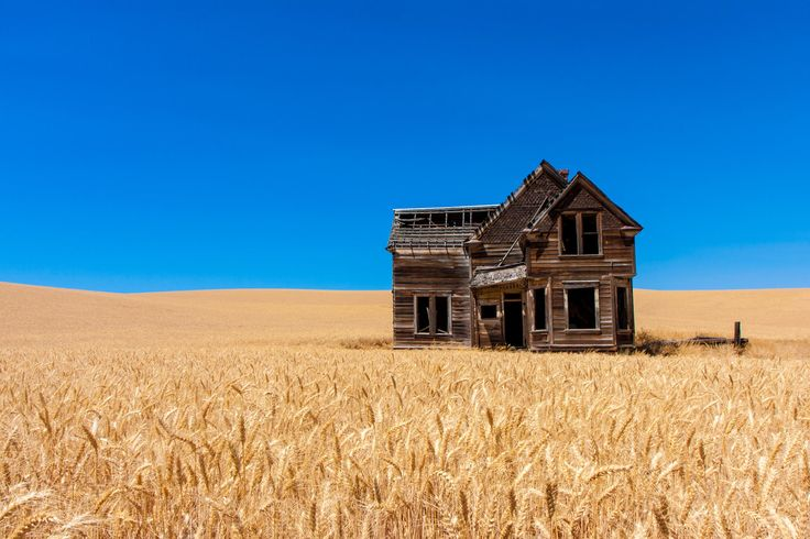 Abandoned house in the middle of a wheat field