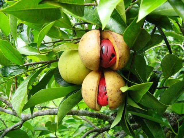 AmidayrusBlog  - Indonesia merupakan negara dengan kekayaan alam yang luar biasa. Bahkan predikat i...