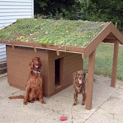 green-roof dog house @Kristen Reinhardt - you could do a raised bed garden/dog house combo! keeps the rabbits away