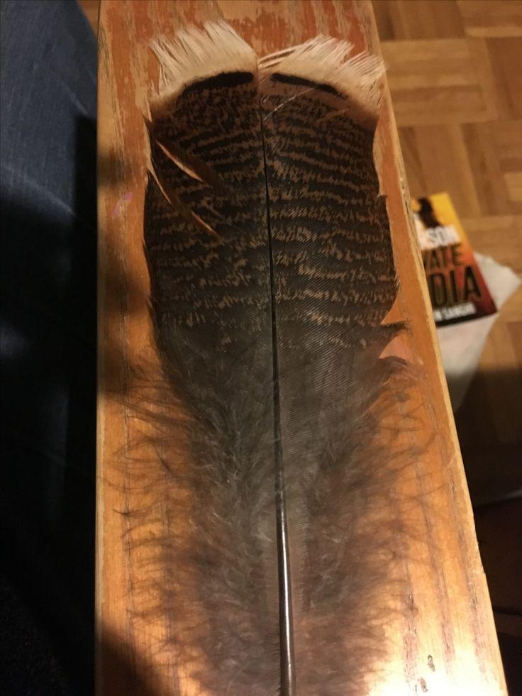 Turkey feather.