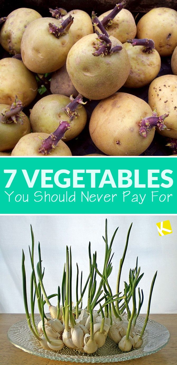 7 Vegetables You Should Never Pay For
