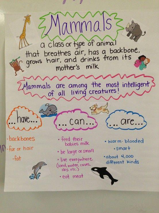 Mammals 3rd Grade Mammal Anchor Chart! W...