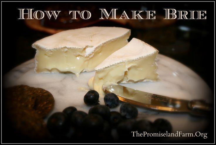 How to Make Raw Milk Camembert / Brie Cheese Video (Cheesemaking Part 5)