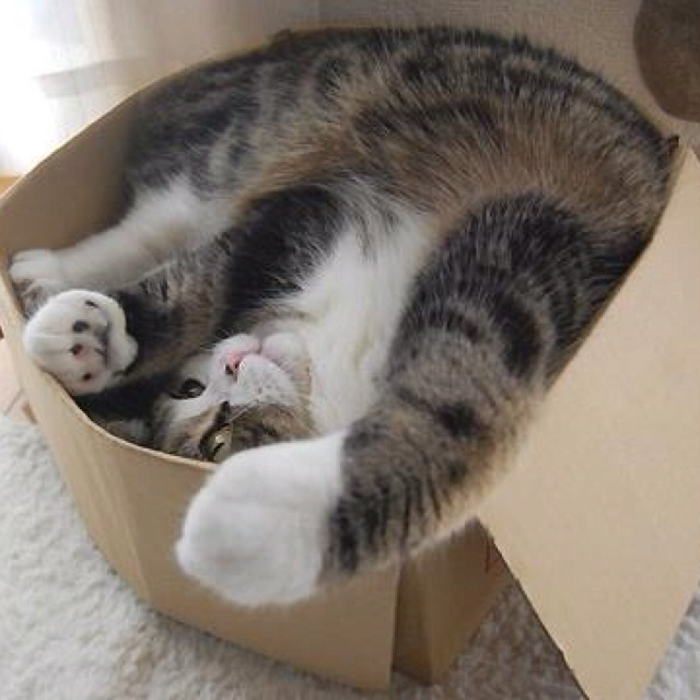 normal for cats