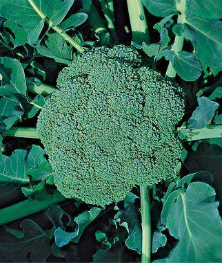 10 Great Vegetables to Grow In Fall | Veggie Gardener