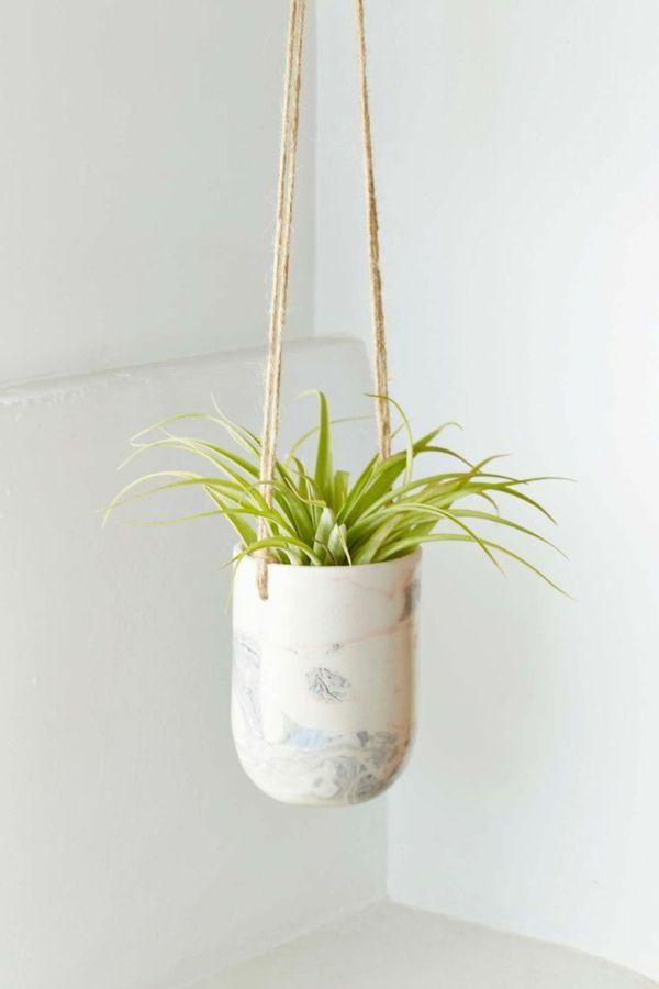 h ngende zimmerpflanzen bilder blumenampel zimmerpflanzen pinterest. Black Bedroom Furniture Sets. Home Design Ideas