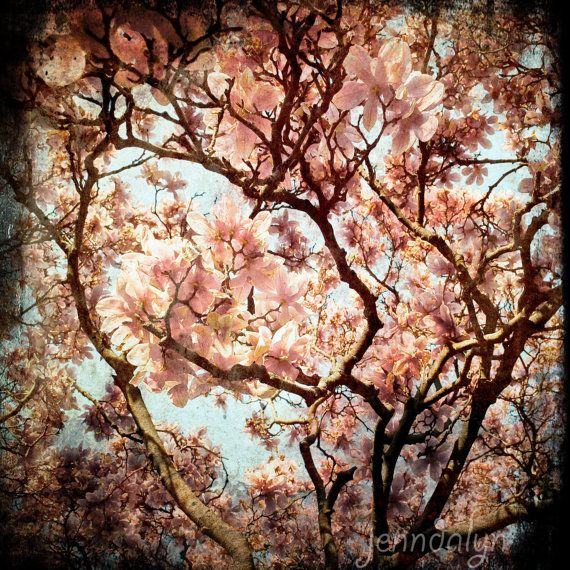 magnolia photo magnolia tree photography magnolia by Jenndalyn, #FlowerShop