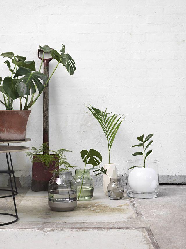 Plant Life 🌿