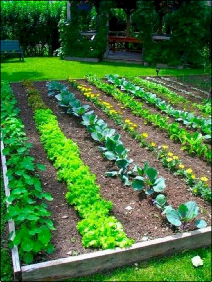 25 Easy Vegetable Garden Layout Ideas For Beginner Gardening